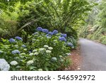 national rhododendron gardens... | Shutterstock . vector #546592972