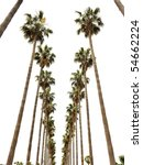Hollywood palms - stock photo