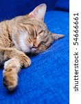 Stock photo the striped cat sleeps on a blue sofa 54666661
