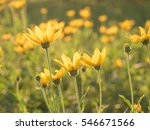 flower in summer time under... | Shutterstock . vector #546671566