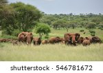 Herd Of Elephants   Serengeti...