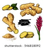 Ginger Set. Vector Hand Drawn...
