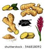 ginger set. vector hand drawn... | Shutterstock .eps vector #546818092