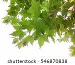 green leaves   Shutterstock . vector #546870838