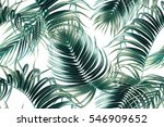 tropical palm leaves  jungle... | Shutterstock .eps vector #546909652