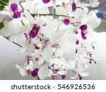 purple and white orchids | Shutterstock . vector #546926536