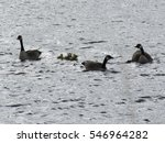 Canada Goose Family Silhouette