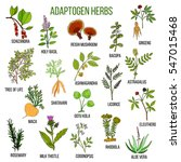adaptogen herbs. hand drawn... | Shutterstock .eps vector #547015468
