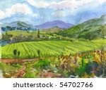 Vineyards. Watercolor.