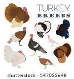 poultry farming. turkey breeds...   Shutterstock .eps vector #547033648