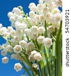lily of the valley   Shutterstock . vector #54703921