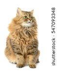 Stock photo domestic cat isolated on a white background 547093348