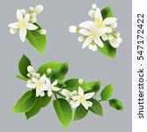 mandarin flowers  citrus... | Shutterstock .eps vector #547172422