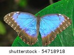 the iridescent winged butterfly ... | Shutterstock . vector #54718918