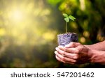 seedlings are grown in the... | Shutterstock . vector #547201462