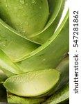 Small photo of Aloe, Aloe vera, Aloin, Barbados, Jafferabad, Star cactus: tree have properties medicaine.