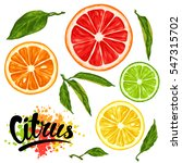set with citrus fruits slices.... | Shutterstock .eps vector #547315702