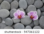 Beautiful Two Orchid On Gray...