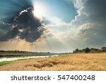 Summer Harvest And Landscape