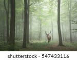 Stunning Image Of Red Deer Sta...
