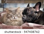 Stock photo cute cat and dog sleeping nearby affectionate good relations of animals love and friendship 547438762