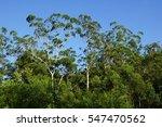 Australian Top Tree Canopy