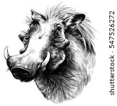 the wild boar with fangs  the... | Shutterstock .eps vector #547526272