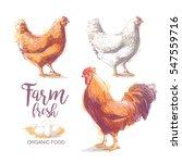 chicken  hen  rooster  cock ... | Shutterstock . vector #547559716