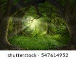 deep tropical jungles of...   Shutterstock . vector #547614952