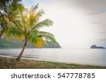 Coconut Tree On The Beach Copy...
