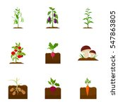Plant Set Icons In Cartoon...
