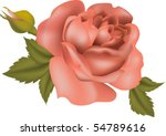 vector illustration of rose thai | Shutterstock .eps vector #54789616
