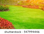 green lawn  the front lawn for... | Shutterstock . vector #547994446