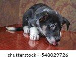 little puppy bezporodny black... | Shutterstock . vector #548029726