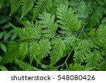 fern | Shutterstock . vector #548080426
