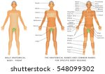male body   front  surface... | Shutterstock .eps vector #548099302