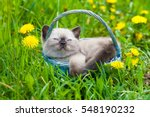 Stock photo dreaming little kitten walking on the grass in sunny day sitting in a basket 548190232