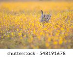 Stock photo young cat plays on meadow 548191678