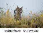 Stock photo young cat plays on meadow 548196982