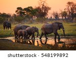 Elephants In Moremi National...