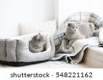 Cute Funny Cats At Home