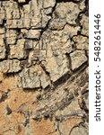 Small photo of Surface of Samanea saman or Albizia saman (Tree names).