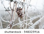 Ice Wine. Wine Red Grapes For...