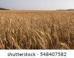 view of a wide wheat field... | Shutterstock . vector #548407582