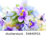 Pansies On White Background...