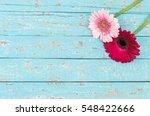 Pink Gerbera Daisy Flowers ...