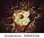 grunge flower background texture | Shutterstock . vector #548492206