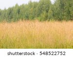 Meadow With Dry Yellow Grass O...