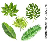 set of tropical palm leaves ...   Shutterstock .eps vector #548527378