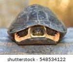 Indian Flapshell Turtle ...
